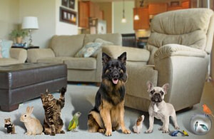 Pets in Home (2)
